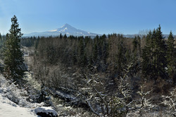 Stream near Mt Hood