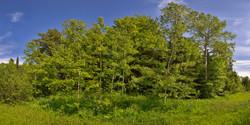 Woods near Lake Superior