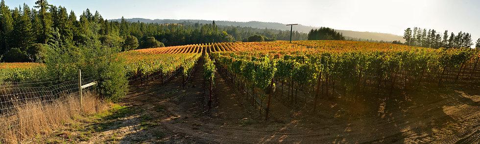 Autumn Winery Leaves, Sonoma, CA