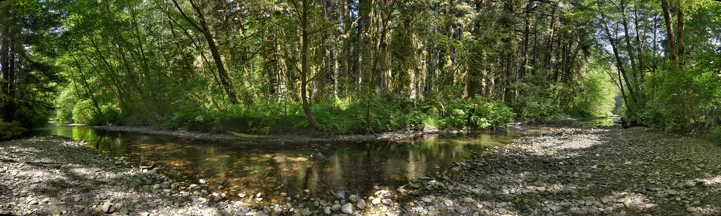 Prairie Creek, Redwood NP