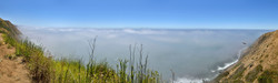 Bird of Prey Rising over Coastal Fog