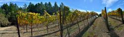 Meyers Grade Winery Western View