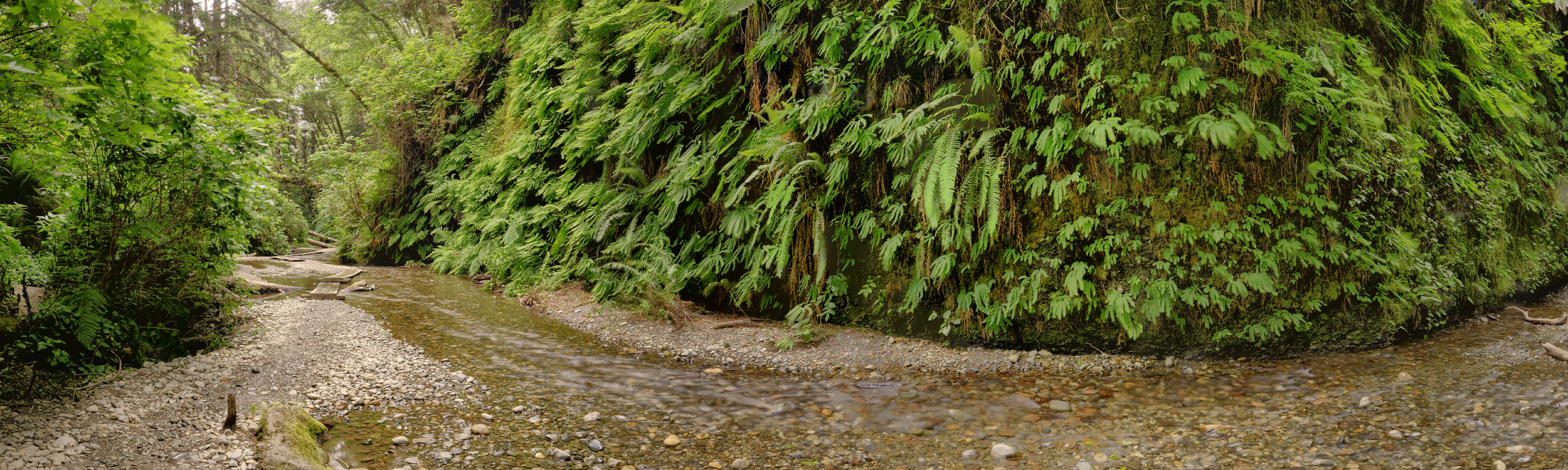 Fern Canyon #2