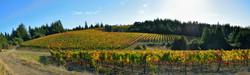 Vineyard an Annapolis Road