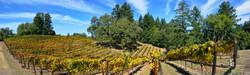 Meyers Grade Road Winery