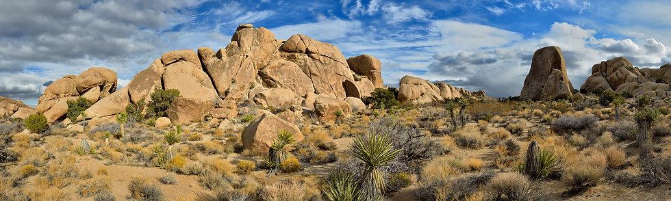 Desert Terrain, Joshua TreeNP