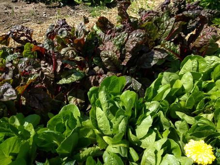 Haphazard Gardening