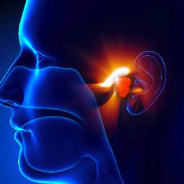 Western Carolina Ear, Nose, and Throat Specialists & Center for Hearing - Ear Services