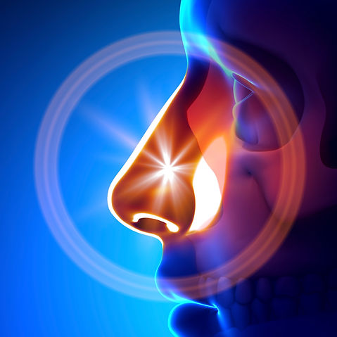 Western Carolina Ear, Nose, and Throat Specialists & Center for Hearing - Sinus Center