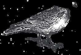 alouette-logo2018.png