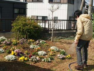 花の植え替え・畑作り開始