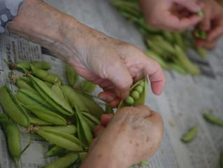 最後の収穫&次への準備