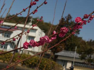 春を見つけました