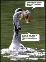 kormoran aal Kopie.jpg