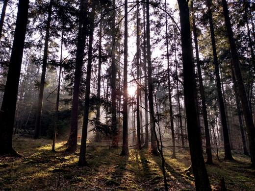 Holzfäller_0020.jpg