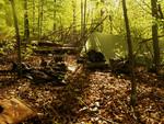 Waldläufer_0019.jpg