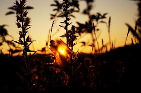 sunrise kallenberg.jpg