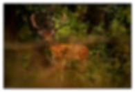imagex013ff.jpg