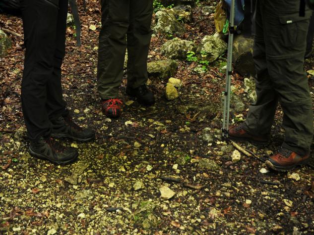 Waldläufer_0003.jpg