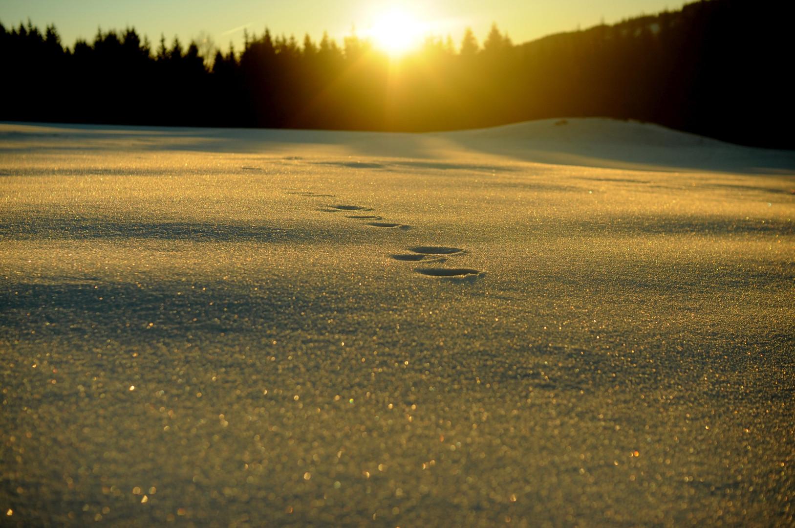 winter biwak 0010.jpg