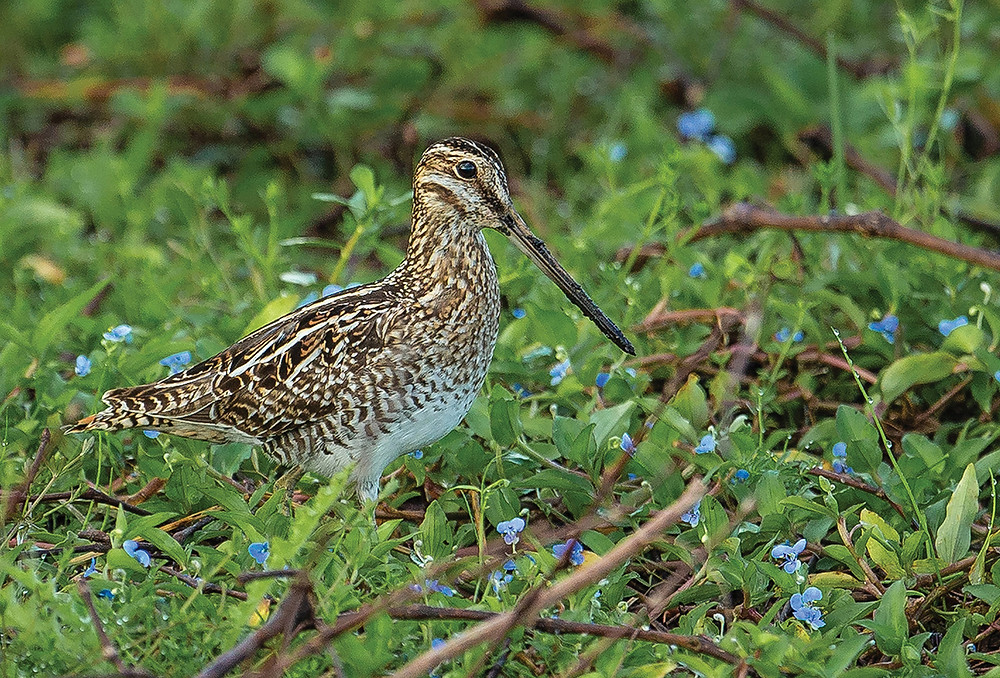 No, we're not kidding. See if you can spot the Snipe.