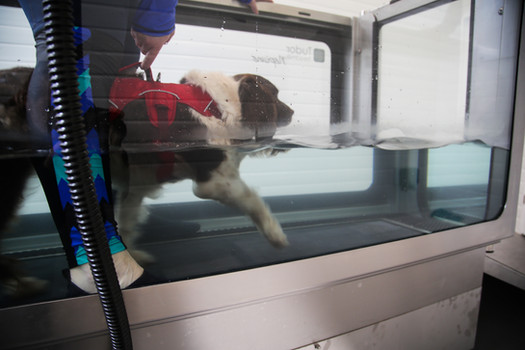 Vinnie in the underwater treadmill