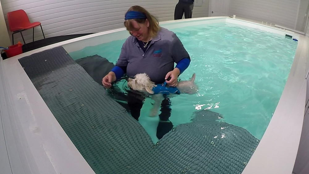 Betty in the hydrotherapy pool