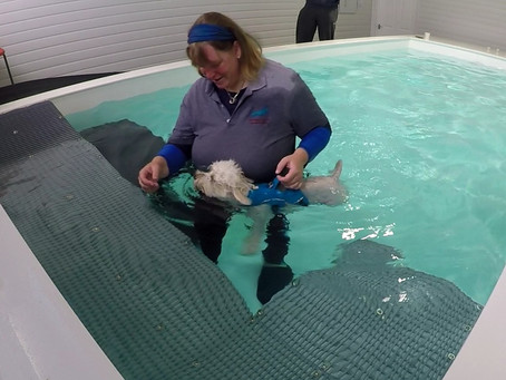 Hydrotherapy and Hip Dysplasia - Betty's Story