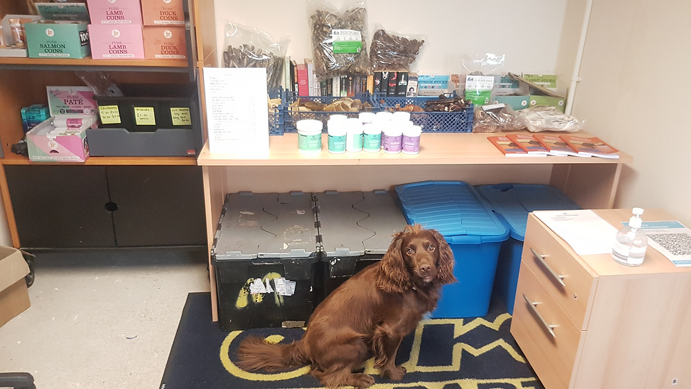 A cupboard and table filled with dog treats with a brown cocker spaniel sitting in front of them.