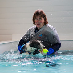 Puppy Tor in the hydrotherapy pool