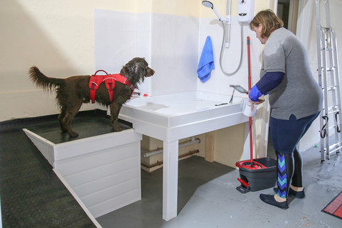 Ripley getting ready for hydrotherapy