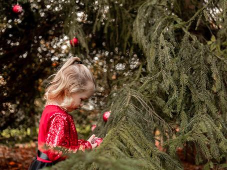 (Kerst) minishoots in Hollandscheveld (Drenthe)