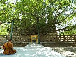 Bodhi_Tree_Distant_View_-_panoramio.jpg