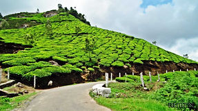 munnar photo point.jpg