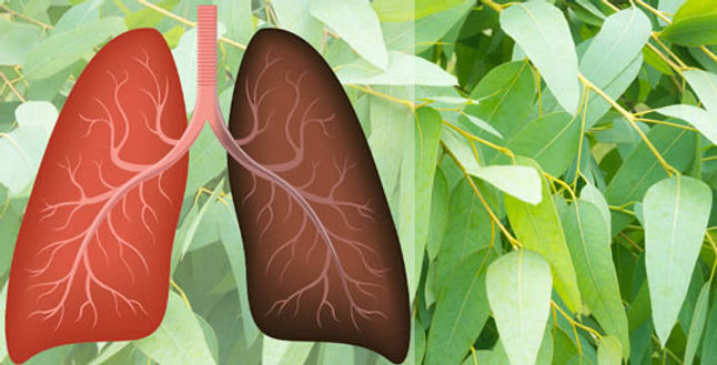 piante-polmoni.jpg