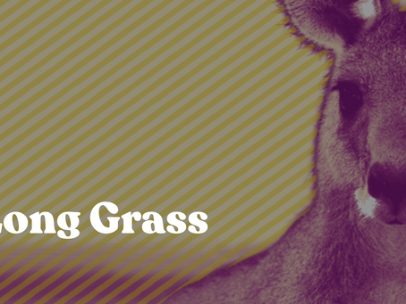 New Flash Fiction: In the Long Grass