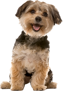 dog obedience classes calgary
