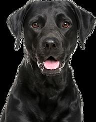 reactive dog training calgary