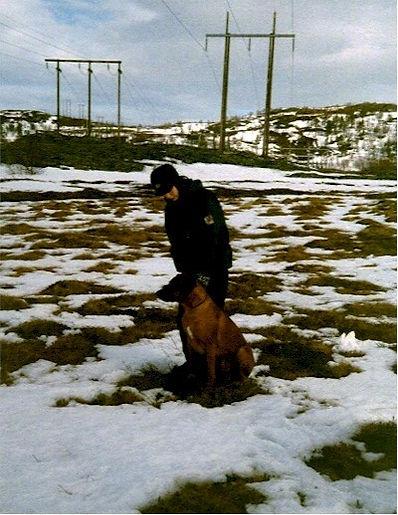 lavinehund1.jpg