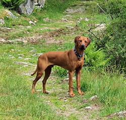 Canes Venatici Cirius-Canis Maior