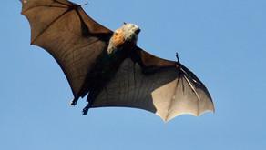 Tausalz, Schleiereule und Fledermäuse stoppen Autobahn