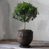 Wabi-sabi ceramic planter