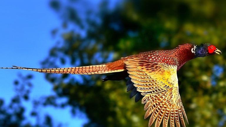 Littleton Shoot - 300 bird day