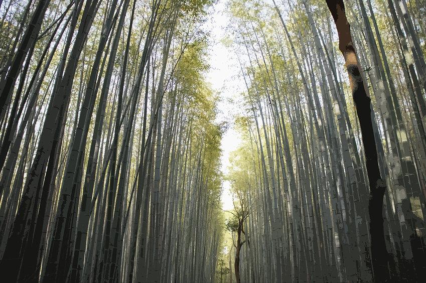 Bamboo_DSC06007.jpg