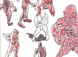 Studi anatomici