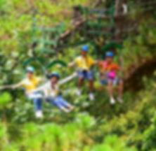 tree top adventure
