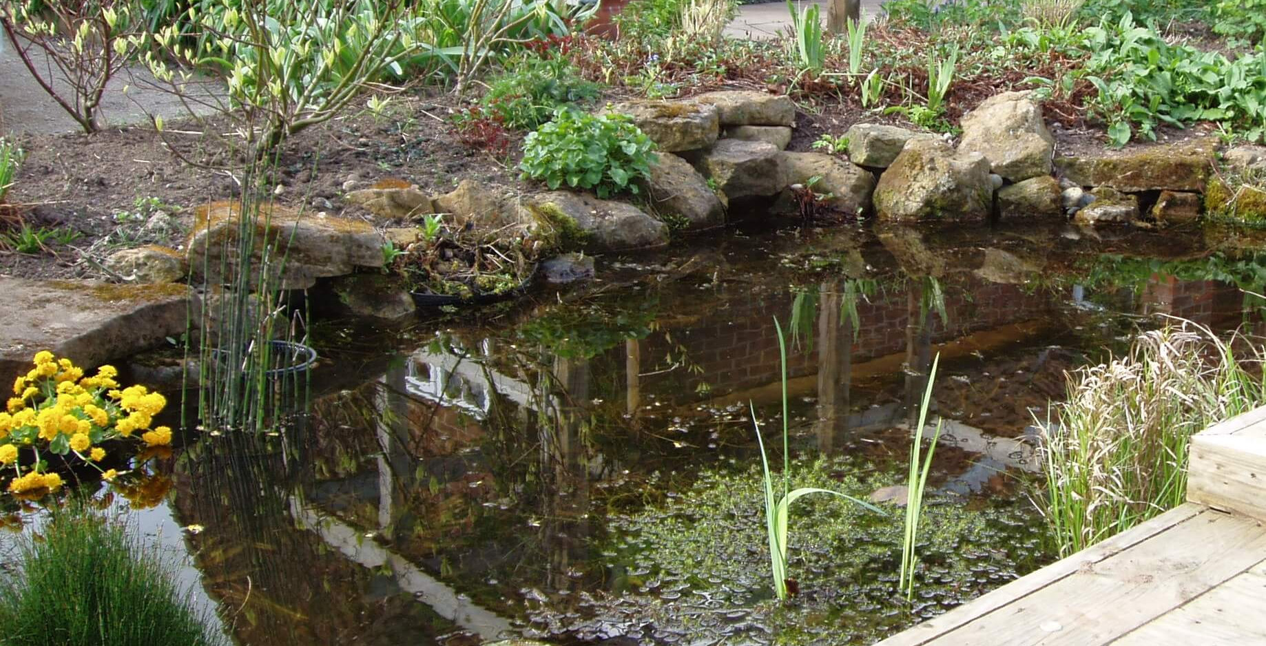 Natural pond in Aslockton