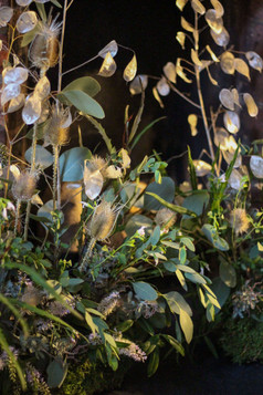 Honesty Teasel Foliage Meadow Event Flow