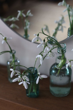 January Flowers Snowdrops Bud Vases.JPG