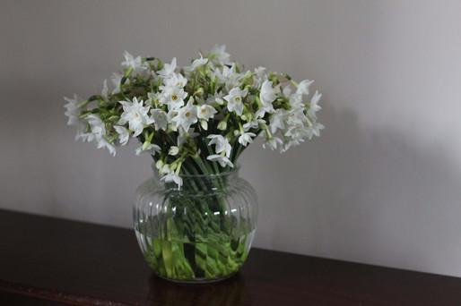 White British Narcissi Kent.JPG